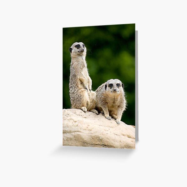 Spotted Greeting Card