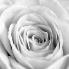 White I by Didi Bingham