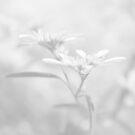 White V by Damienne Bingham