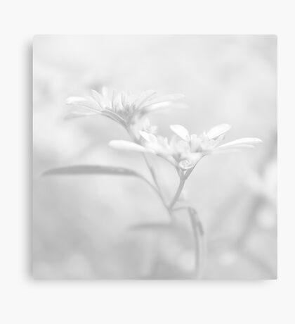 White V Canvas Print