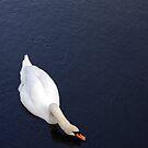 Feeding Swan by llemmacs