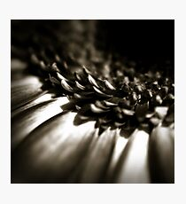 Life Is In The Details IX Photographic Print