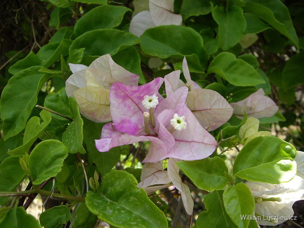 fleur du Jourdain by william lyszliewicz