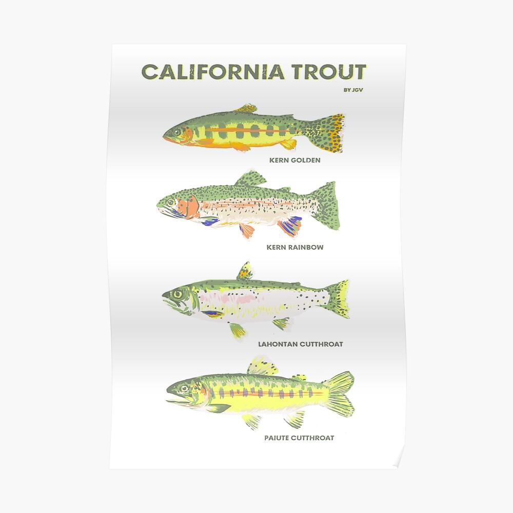Kalifornische Forelle Poster