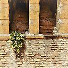 Roman Brick With Trailing Plant by Fara
