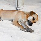 Sleeping Beach Dog von travelmoments