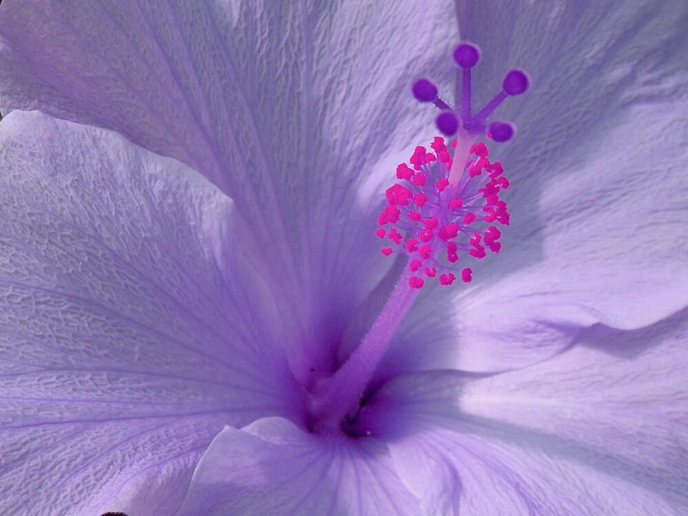 Purple Beauty by Cajunbrn67