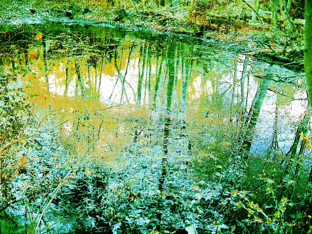 algae by Tracy L. Connors