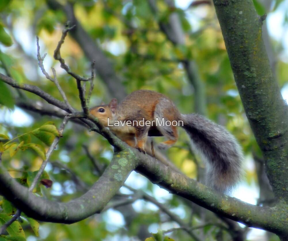Stunt Squirrel by LavenderMoon