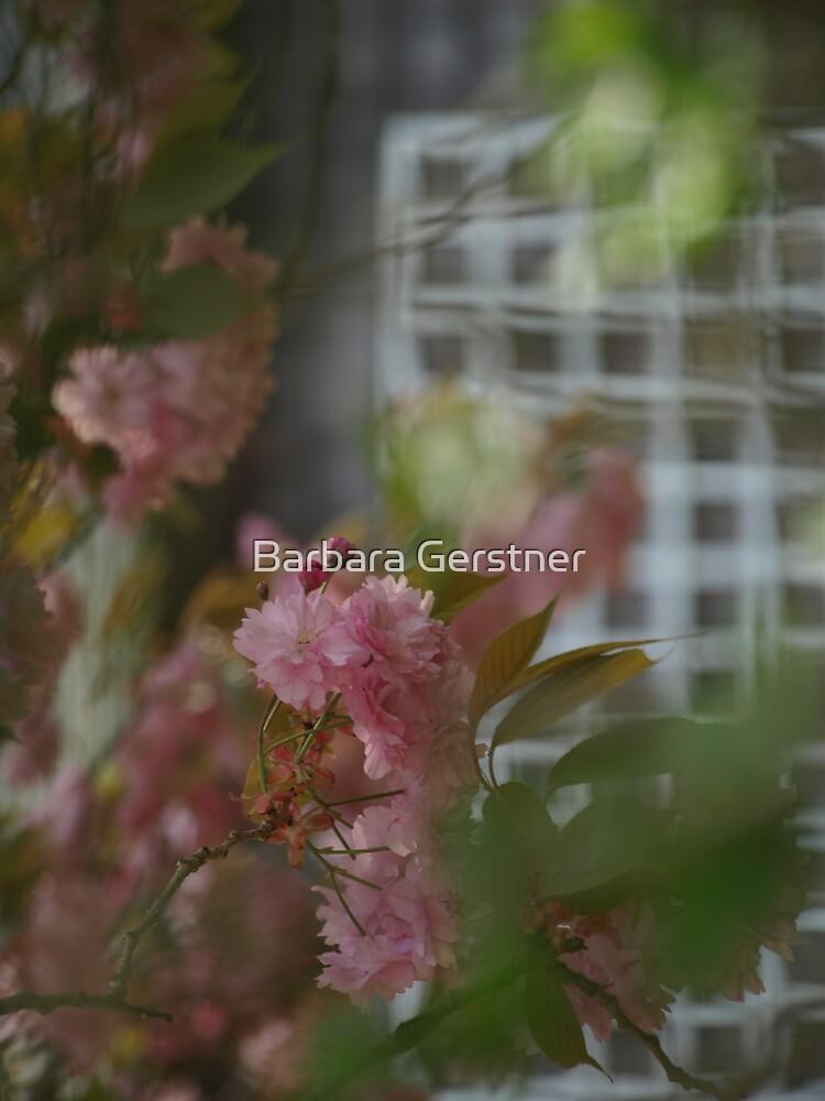 Focus by Barbara Gerstner