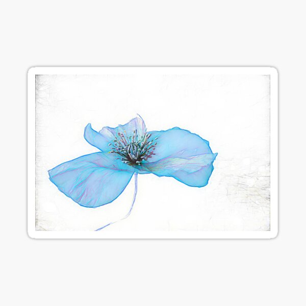 POPPY IS  FEELING BLUE  ( From Painted Flowers collection )  Sticker
