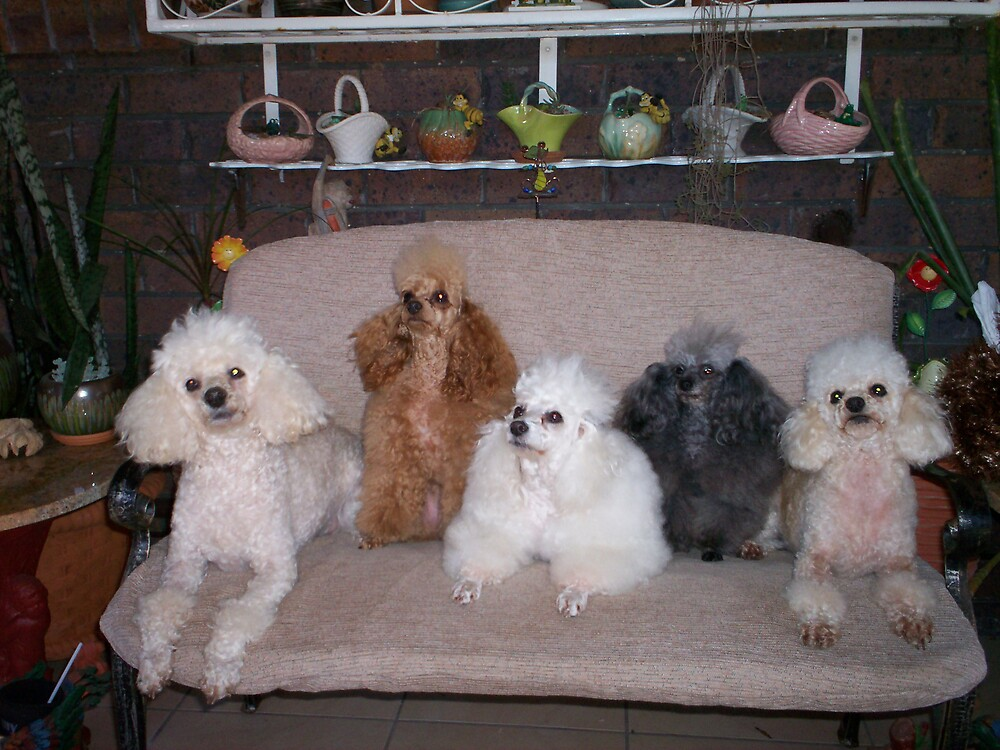 Oodles of Poodles by Wendy 00000