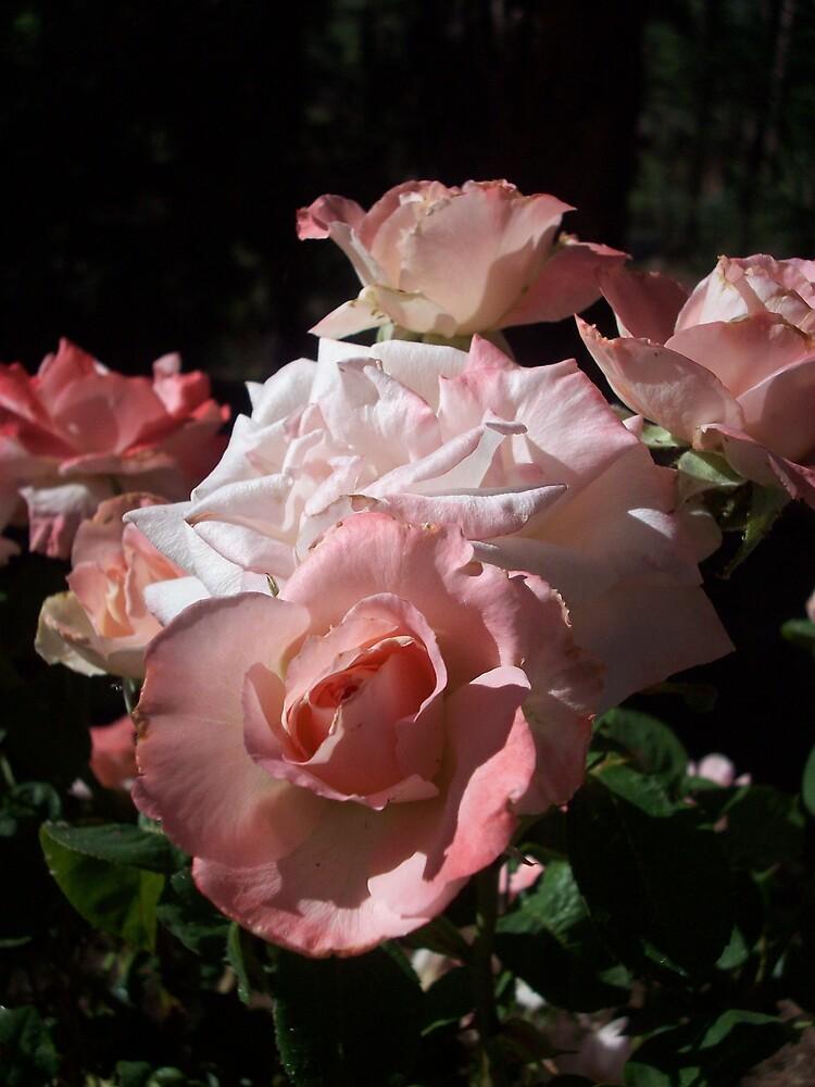 Roses In The Dark by Dakela