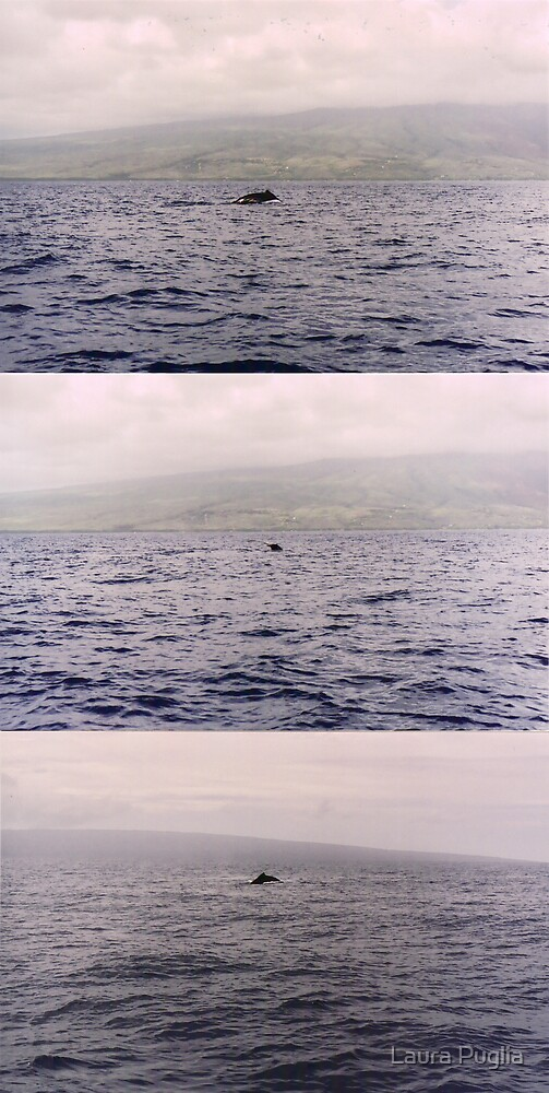 I saw the whales... far away.. but, I saw them.. by Laura Puglia