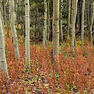 Colorful Aspen Forest Floor by Bo Insogna