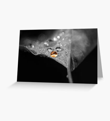 Star of Autumn Greeting Card