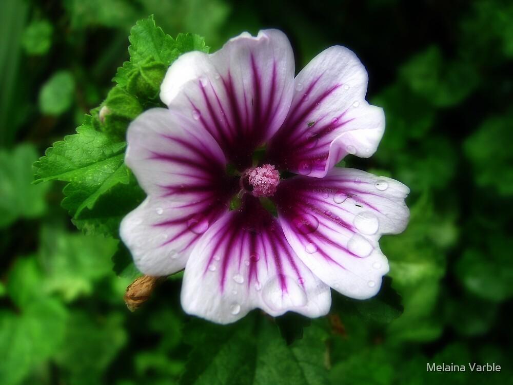 Bloom by Melaina Varble