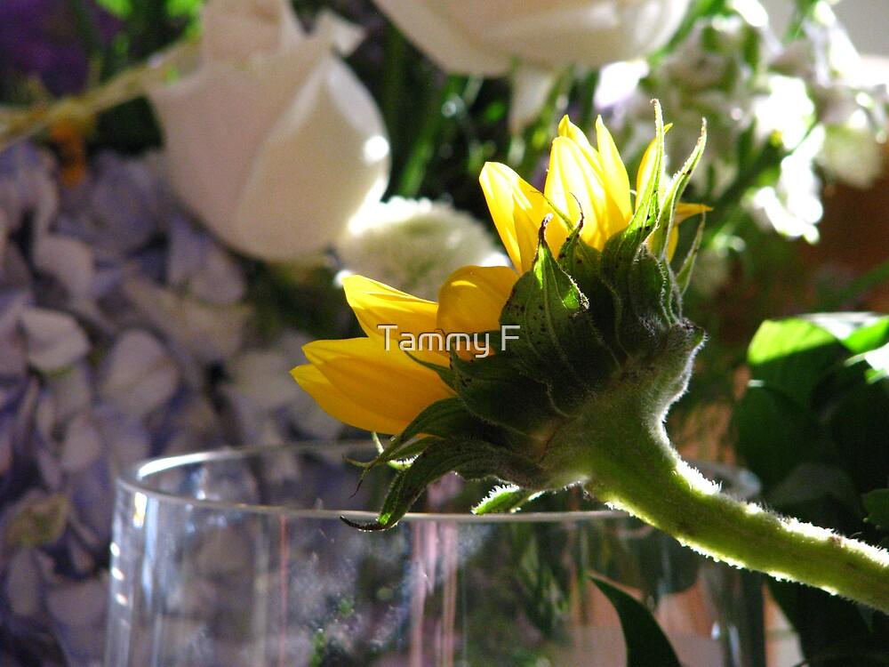 Sunning Sunflower by Tammy F