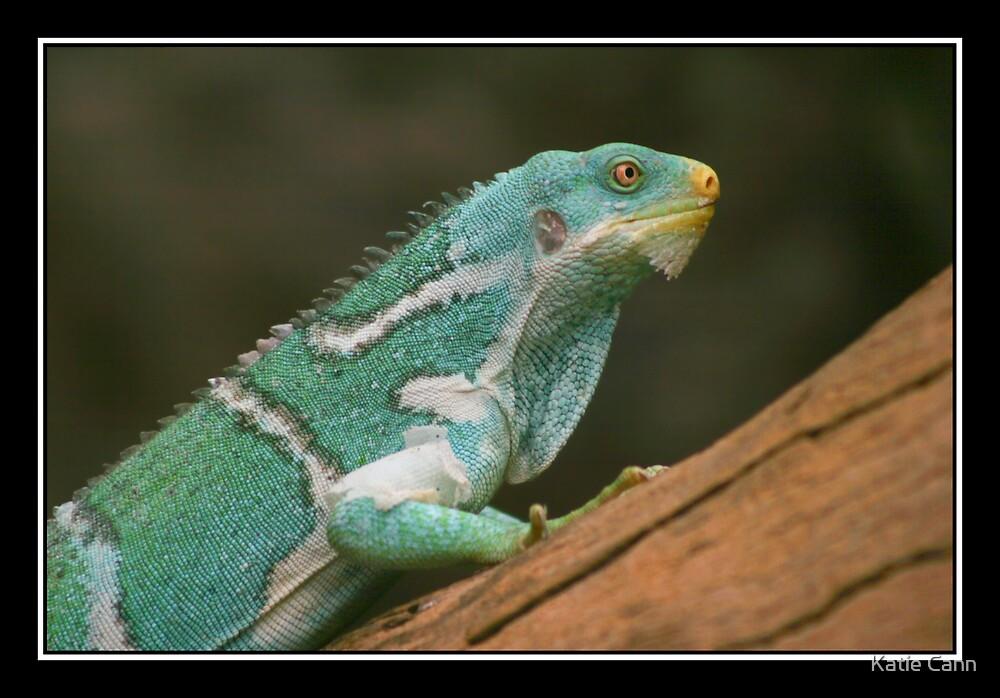 Iguana by Katie cann