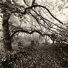 Misty Garden 2 by Geoff Smith