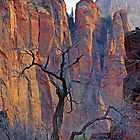 Zion Vertical by Harry Oldmeadow