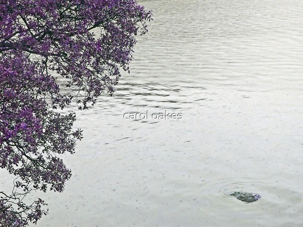 purple time bush by carol oakes