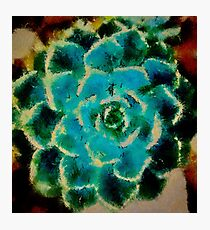 Cacti Dreams Photographic Print