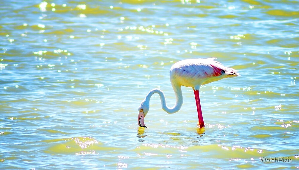 Flamingo by WelshPixie