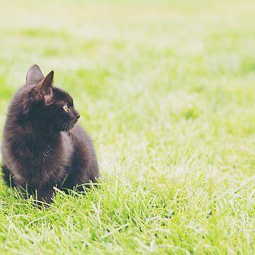 Adorable little black kitten sitting on green lawn by LukeSzczepanski