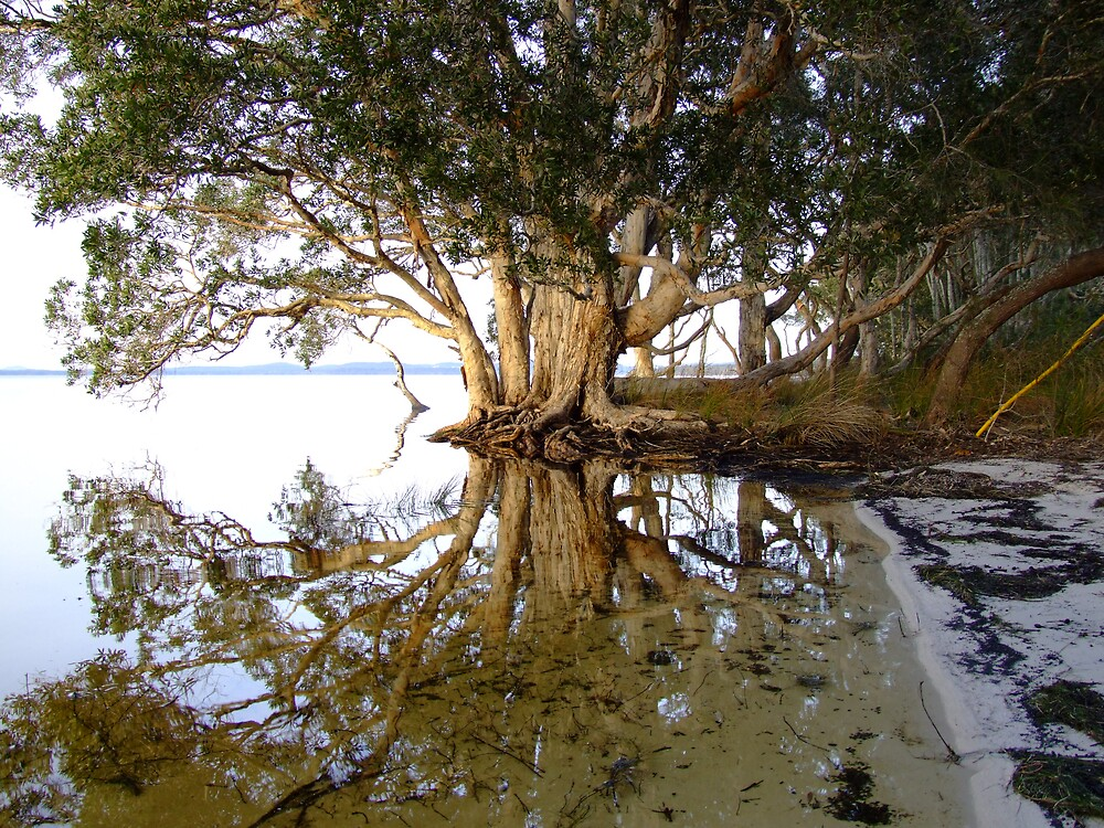 Paperbark Reflections by wombat23