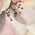 Suginami Sakura 2 by samanthajhorne
