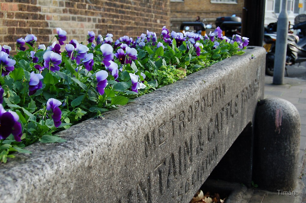 Flower trough by Timana