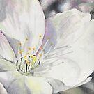 Suginami Sakura 1 by samanthajhorne