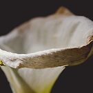 Crab Spider on Arum Lily - 2 by WelshPixie