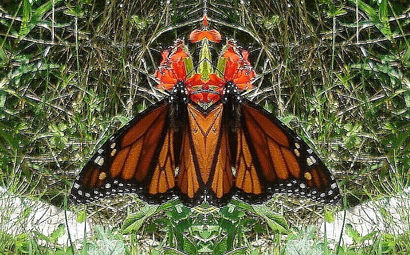 Butterfly mirrored by Doreen