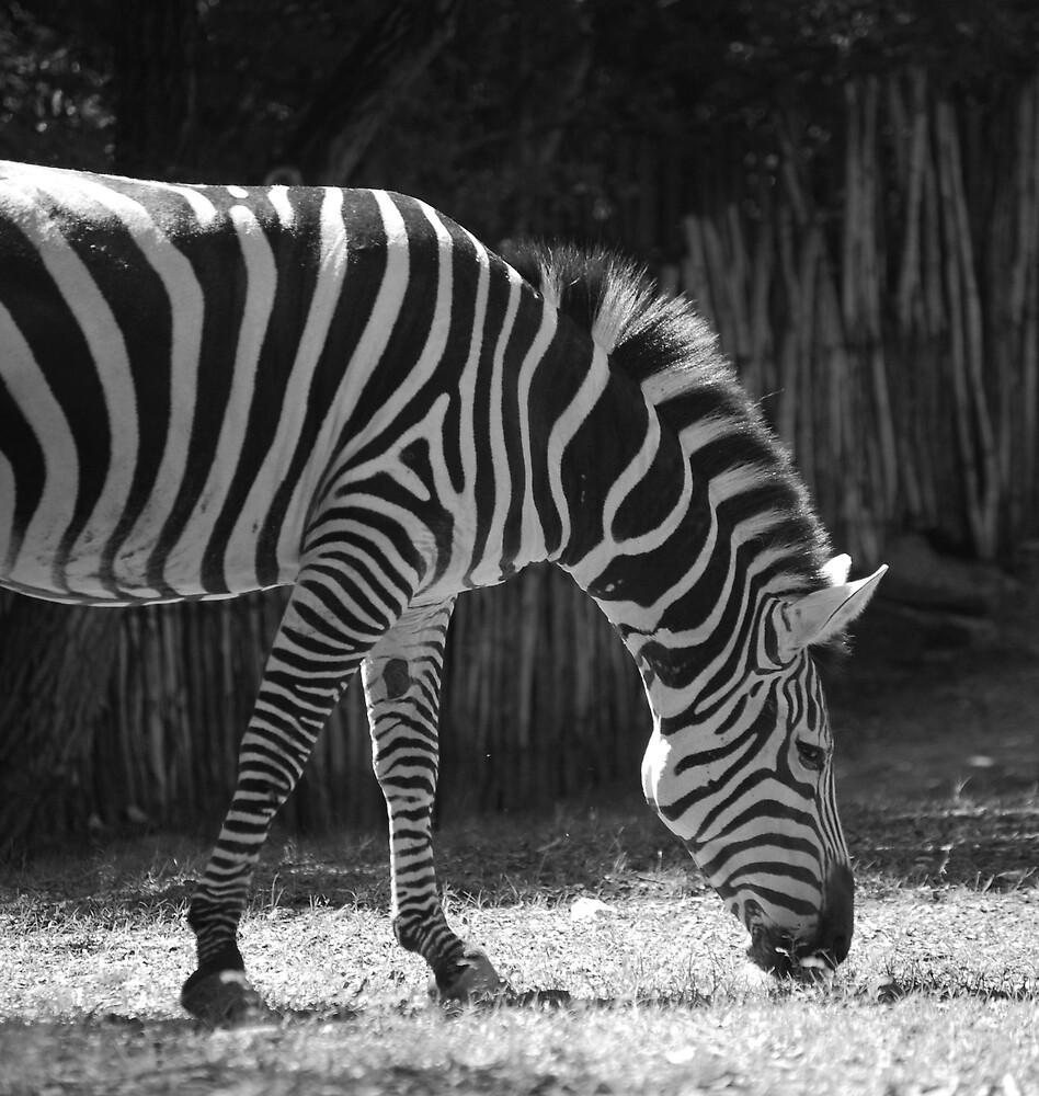 Zebra by marycloch