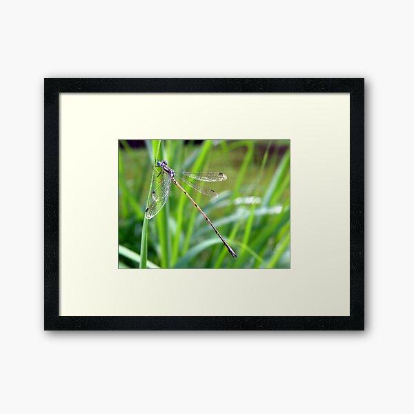 Blue Eyes Framed Art Print