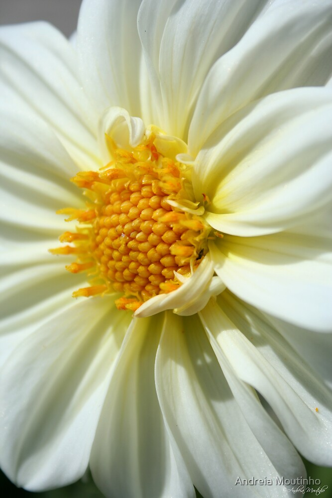 Pure White by Andreia Moutinho