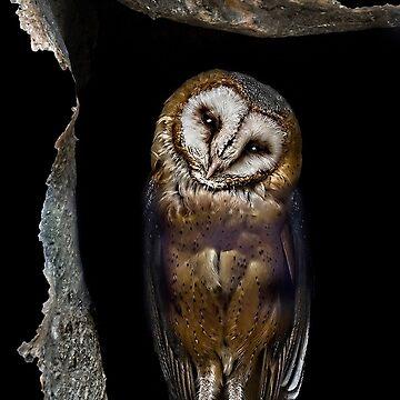 Shy owl  by AleFairyland