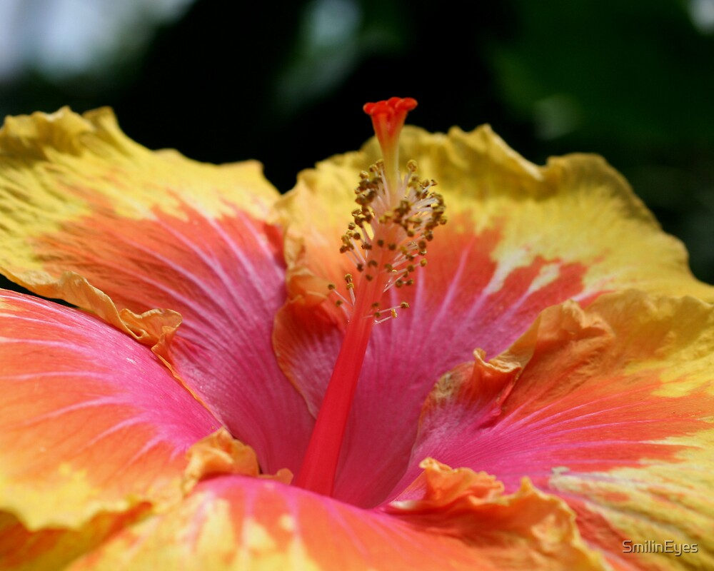 Hibiscus Up Close Flower Photograph by SmilinEyes