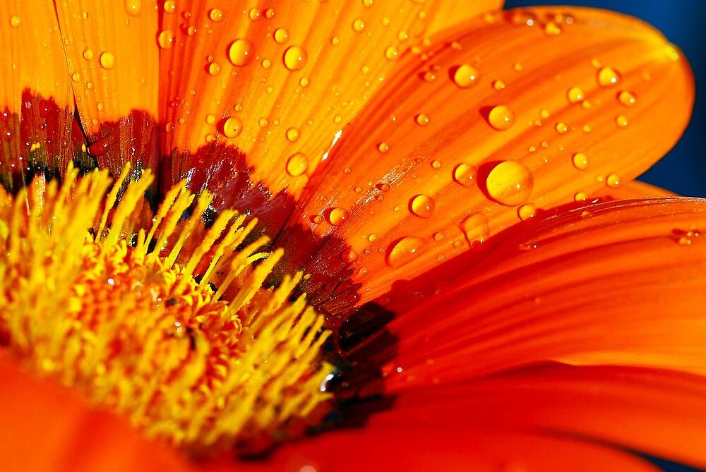 Bright Orange by kenrobinson