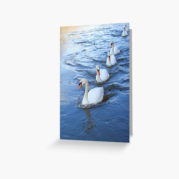 Swan lane Greeting Card