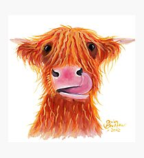 Scottish Highland Cow ' GARLIC ' by Shirley MacArthur Photographic Print