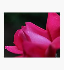 Red Rose Up Close Flower Photograph Photographic Print
