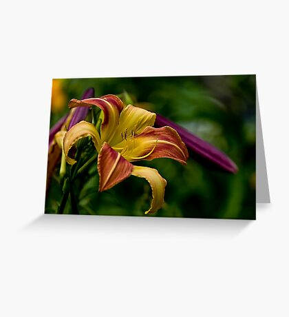 """""""Cobourg Fright Wig"""" Daylily Greeting Card"""