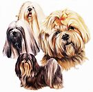 Lhaso Apso by BarbBarcikKeith