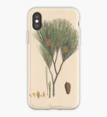 Botanische Kiefer iPhone-Hülle & Cover
