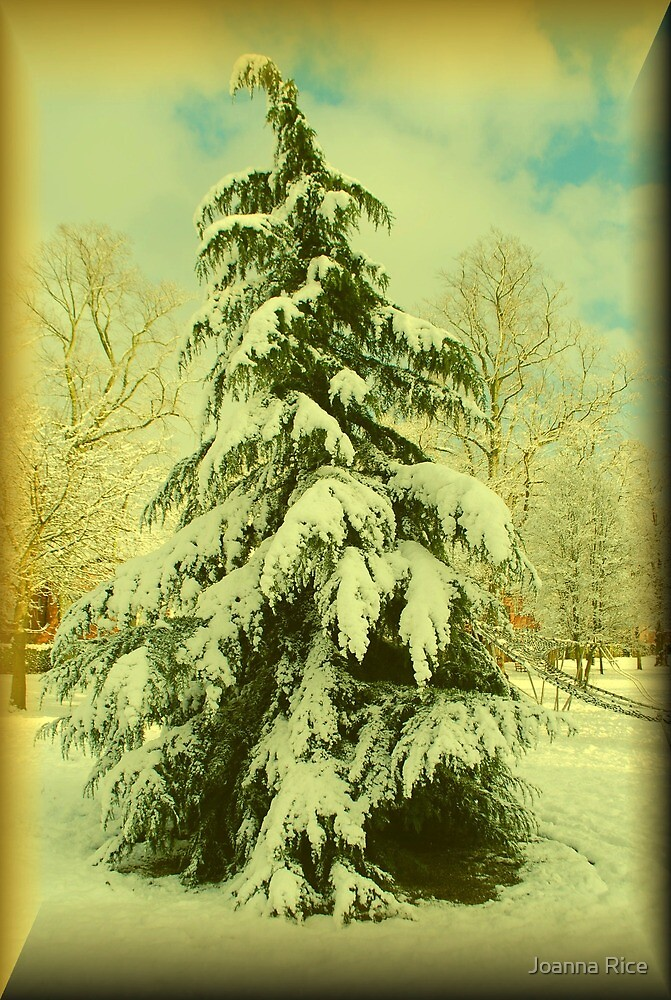 Snow covered tree, Chapelfield Gardens, Norwich, England by Joanna Rice