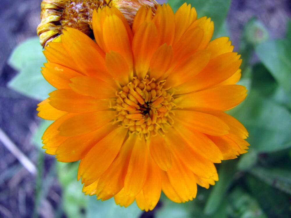 Orange Glory by Robert Jenner