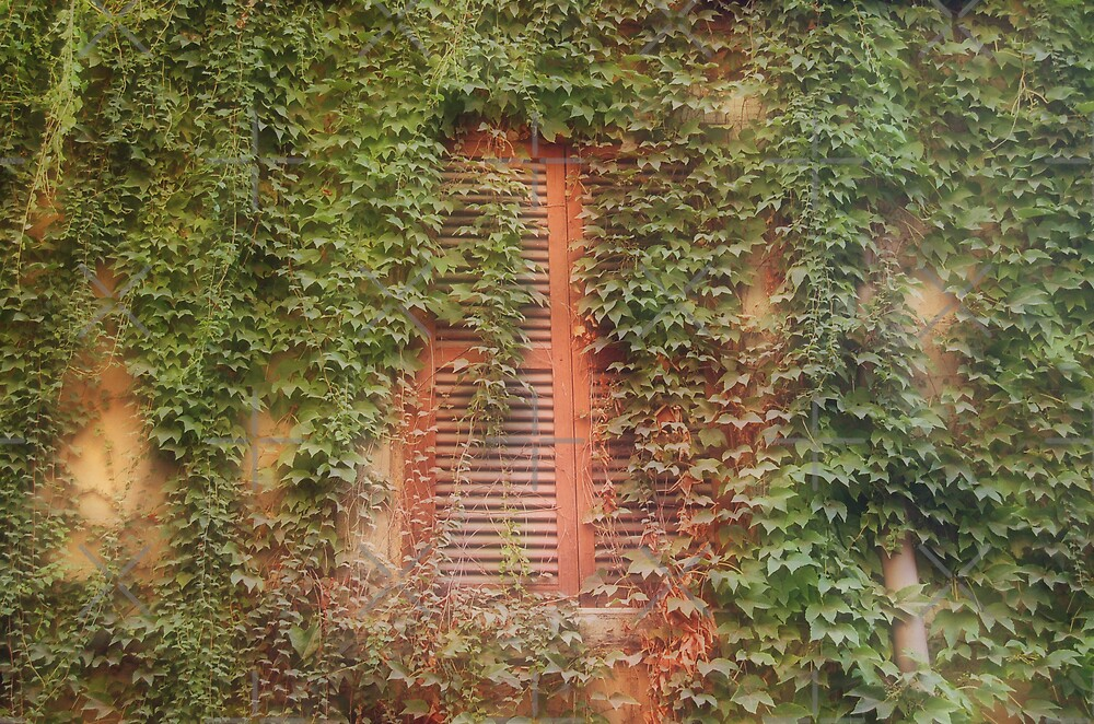 ivy-clad window by monica palermo